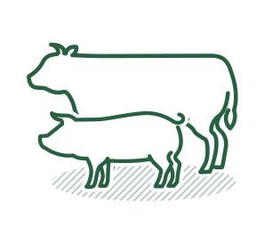 家畜のと畜解体処理 に関する業務